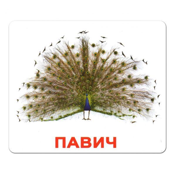 Картки Домана Птахи