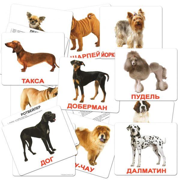 Картки Домана Породи собак