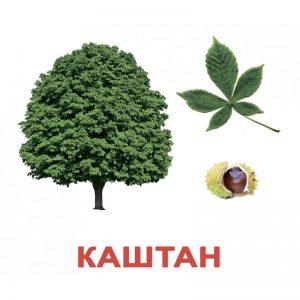 """Карточки Домана """"Деревья"""" на рус."""