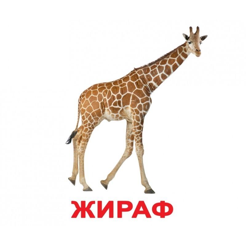 "Карточки Домана ""Дикие животные"" на рус."
