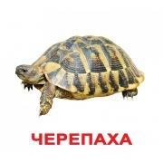 """Карточки Домана """"Домашние животные"""" на рус."""