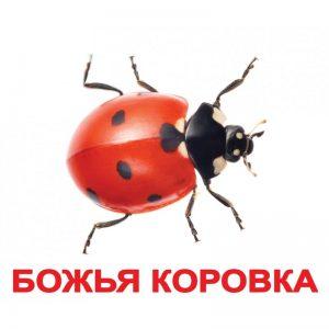 """Карточки Домана """"Насекомые"""" на рус."""