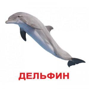"Карточки Домана ""Обитатели воды"" на рус."