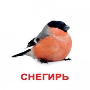 """Картки Домана """"Птахи"""" російською"""