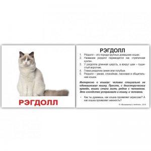 """Мини-карточки Домана """"Породы кошек"""" с фактами на рус."""