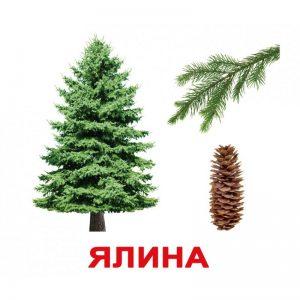 """Карточки Домана """"Деревья"""" на укр."""