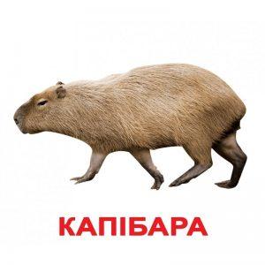 """Карточки Домана """"Экзотические животные"""" на укр."""