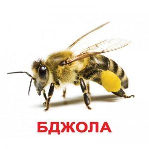 """Карточки Домана """"Насекомые"""" на укр."""