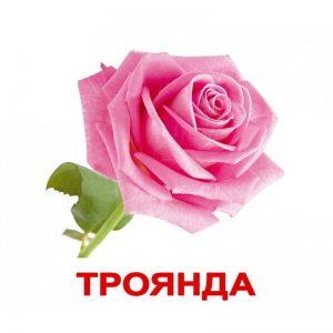 "Карточки Домана ""Цветы"" на укр."