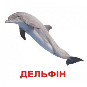 "Карточки Домана ""Обитатели воды"" на укр."