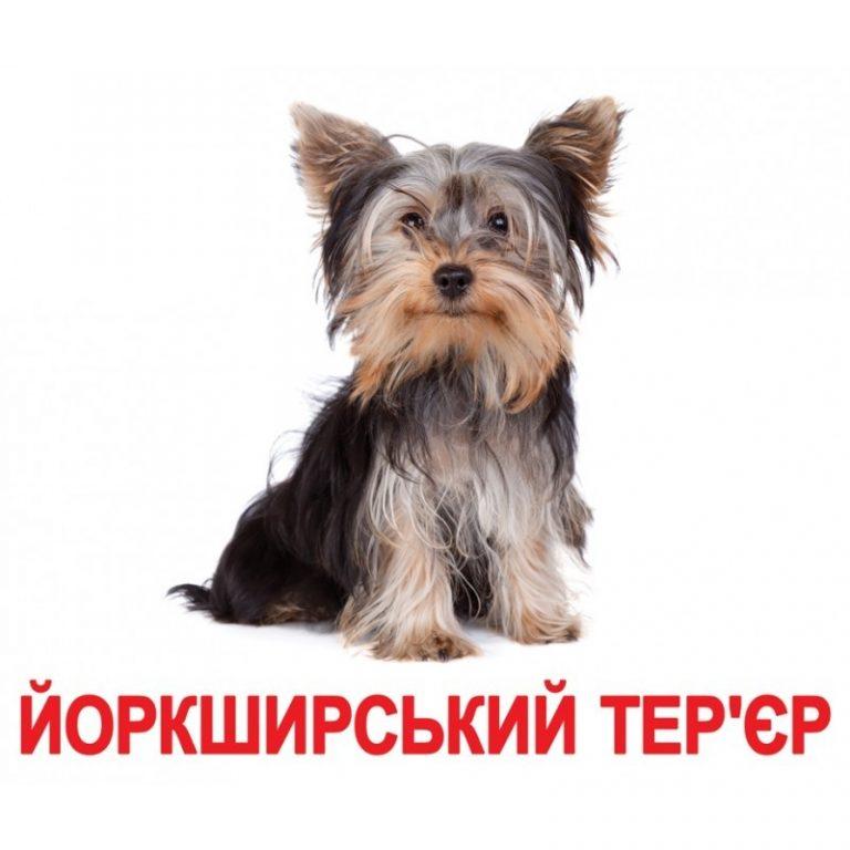 Породы собак картинки с подписью