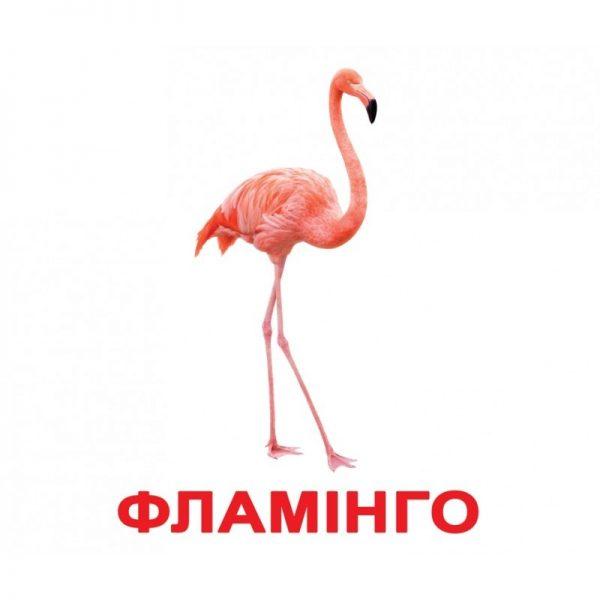 """Картки Домана """"Птахи"""" українською"""