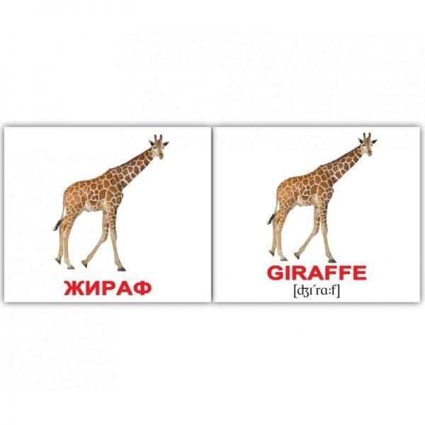 """Міні-картки Домана """"Дикі тварини/Wild animals"""" рос/англ."""