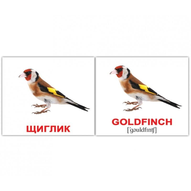 """Мини-карточки Домана """"Птицы/Birds"""" на укр/англ."""