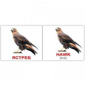"""Міні-картки Домана """"Птахи/Birds"""" рос/англ."""