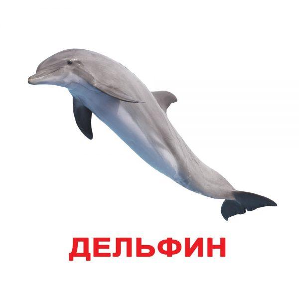 """Подарочный набор карточек Домана """"Мир животных"""" на рус."""