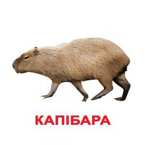 """Подарочный набор карточек Домана """"Мир животных"""" на укр."""