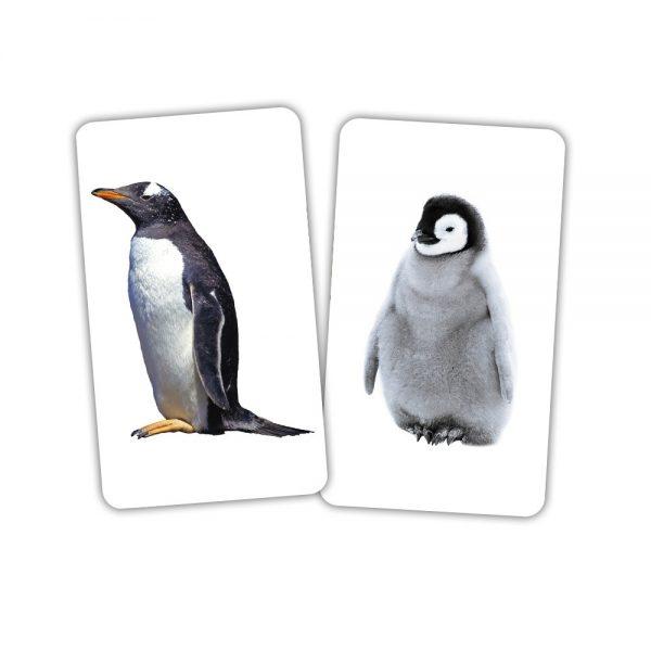Карточки Домана Животные и детеныши с инструкцией на русском языке