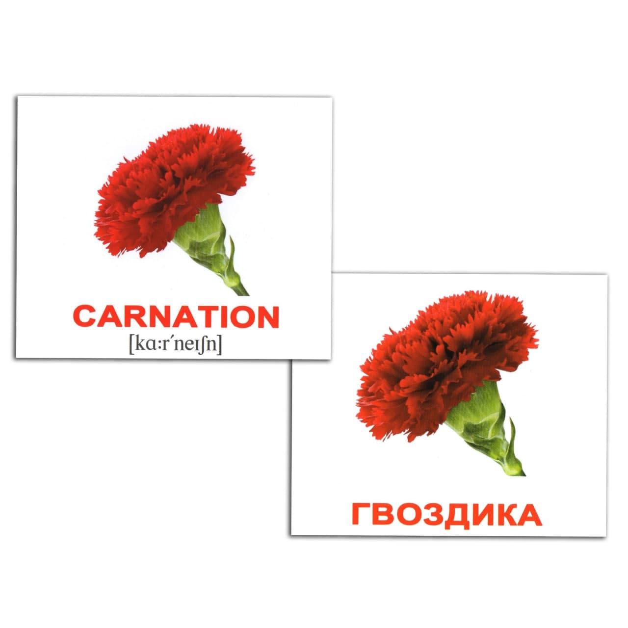 Міні картки Домана Квіти